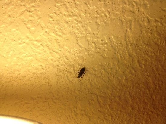 Econo Lodge: Our third room mate.