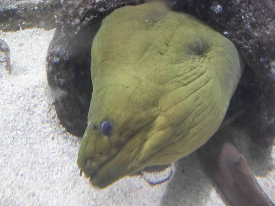 Sao Paulo Aquarium: Morena