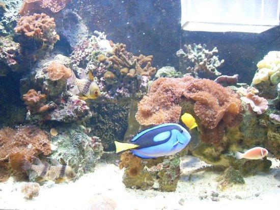 """Sao Paulo Aquarium: Peces tropicales de la película de """"Nemo"""""""