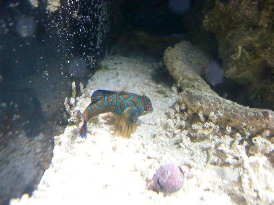 Sao Paulo Aquarium: Pez con colores maravillosos
