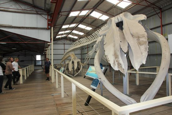 Albany's Historic Whaling Station: Whale skeleton