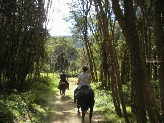 Tui Lodge: Horse Trek with Selwyn