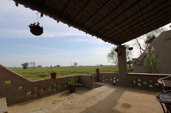 Punjabiyat: View from the Khatiya ( charpoy)