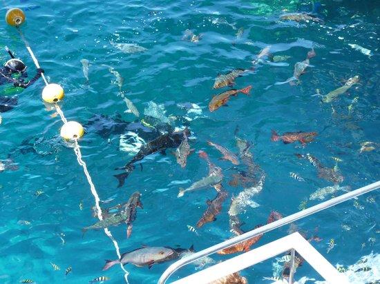 Feeding Fish Picture Of Quicksilver Cruises Port
