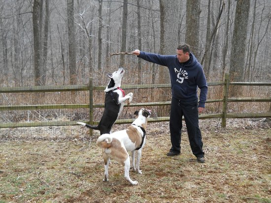 Ole Mink Farm Recreation Resort: The dog-park