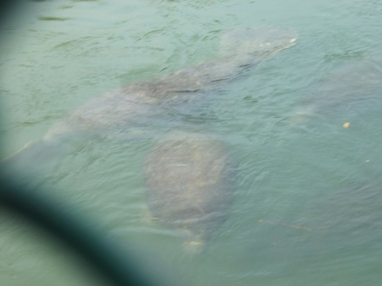 Tampa Electric's Manatee Viewing Center : a child's view