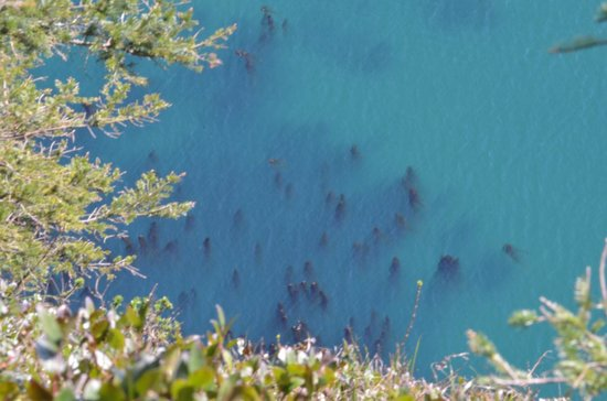 Cape Lookout State Park: Kelp forest from above