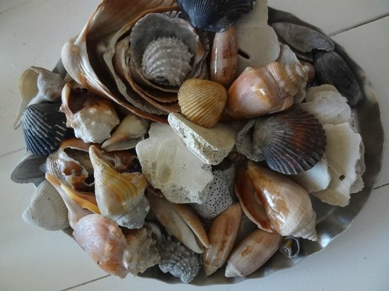 Clearwater Condominiums : SHELLS