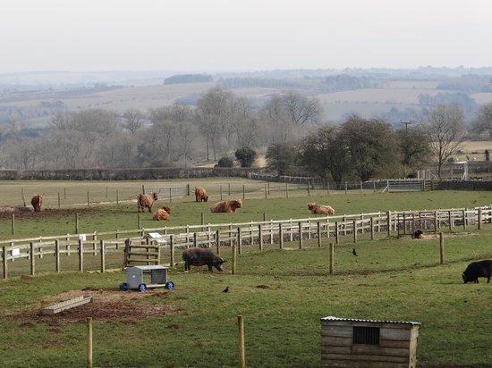 Cotswold Farm Park 사진