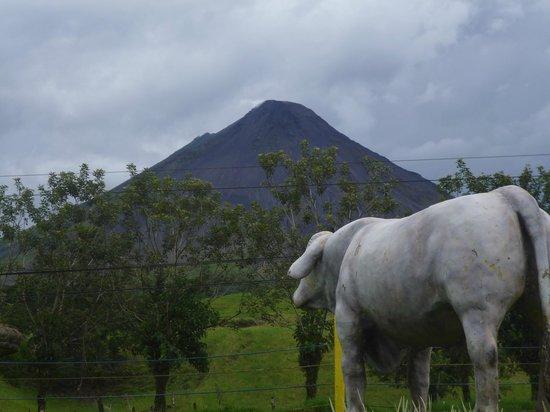 El Novillo del Arenal: Excelente Vista al Volcán Arenal