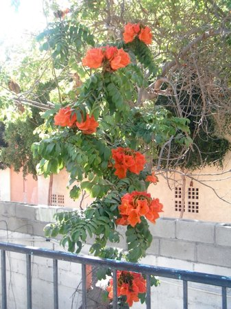 Hotel Posada Senor Manana: One of many beautiful flowers in the yard..