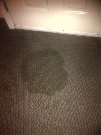 Days Inn Abbeville: Carpet stain