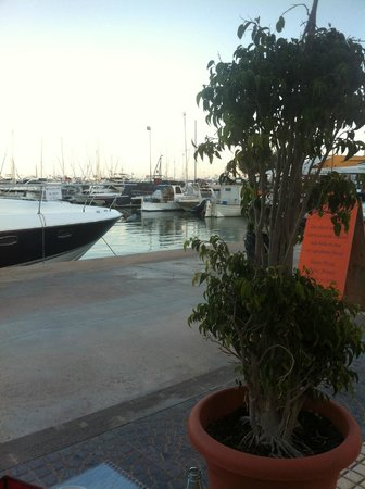 AzuLine Hotel Mediterreineo: The Harbour 10 mins from the Apartments there are bars and restaurants there also