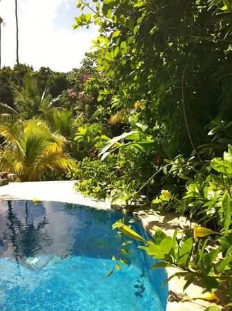 Fond Doux Plantation & Resort: Piscina