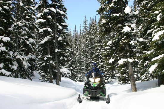 Toby Creek Adventures Ltd.: Groomed Trail and Freeriding too!