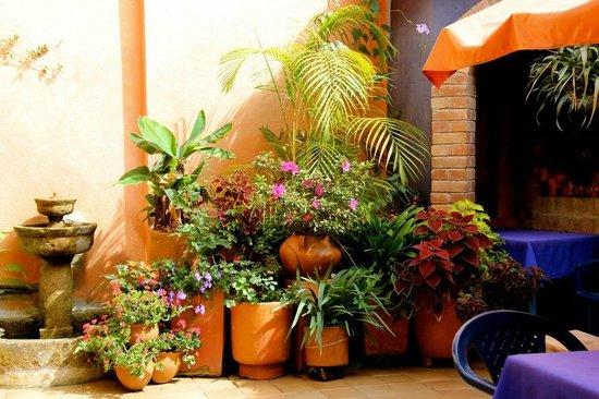 Posada de Los Angeles: Main patio full of beautiful flowers