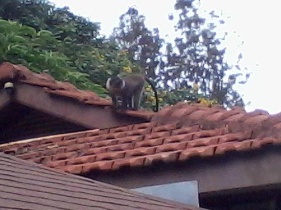 Hotel LaMada: wildlife