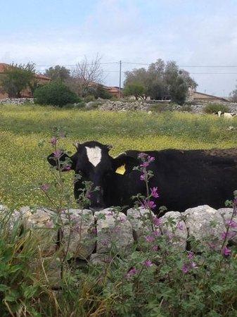 Agriturismo Il Granaio : fuori dall'agriturismo