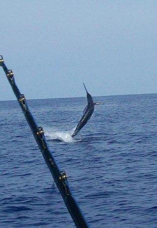 Humdinger Sportfishing: Jumping Marlin