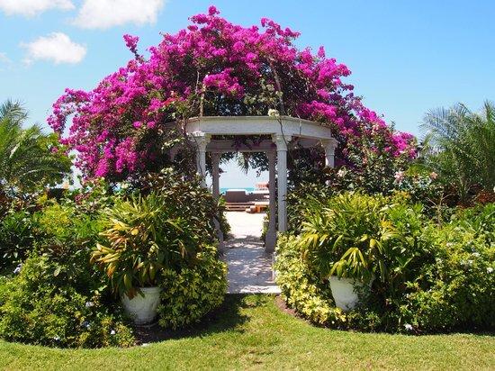 Sandals Grande Antigua Resort & Spa: Caribbean grove