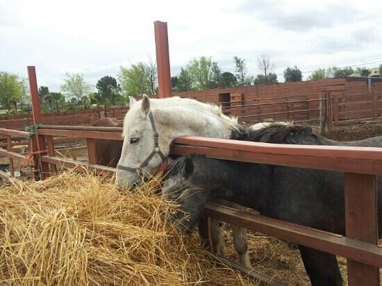 Le Querce di Mamre: cavalli