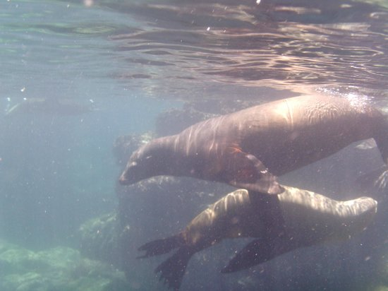 Leo's Baja Oasis: Snorkeling with sea lions, set up with Leo, 3/2013