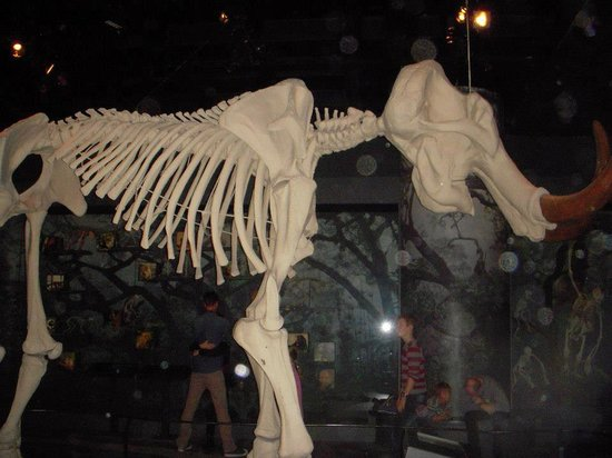 Museo Sueco de Historia Natural: photo from museum