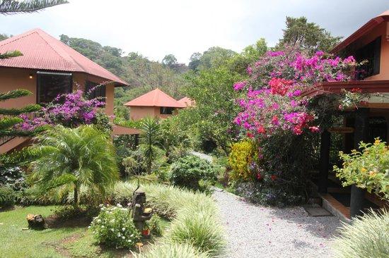 Boquete Garden Inn : Garden view