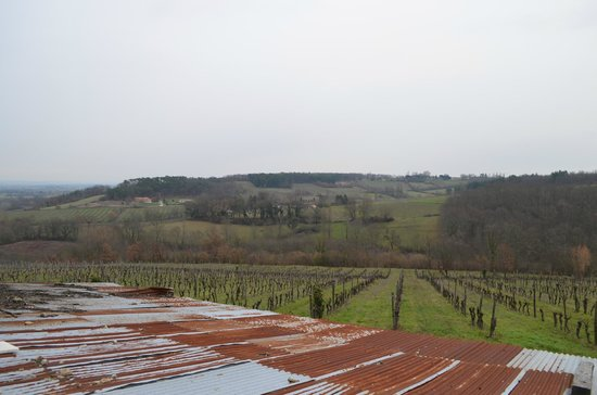 Chateau Feely: View over the vineyard