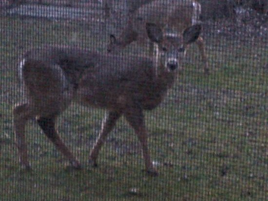 Ivey Spencer Leadership Centre: Deer at my window