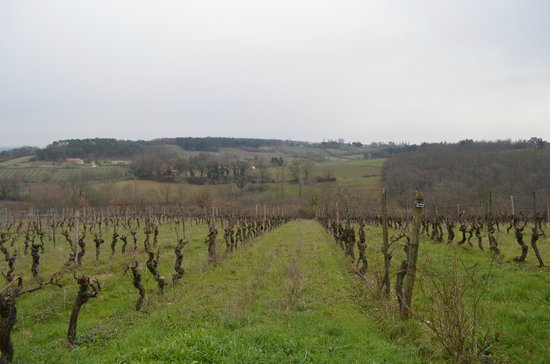 Château Feely: View over the vineyard