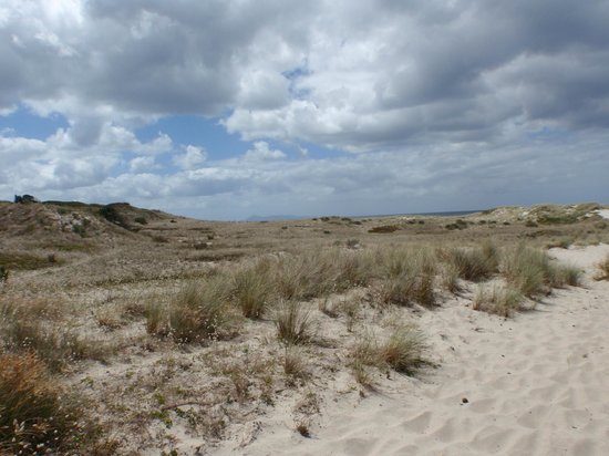Pakiri Beach Horse Rides - Day Tours: More sand dunes - this place makes you feel like the desert meets the sea