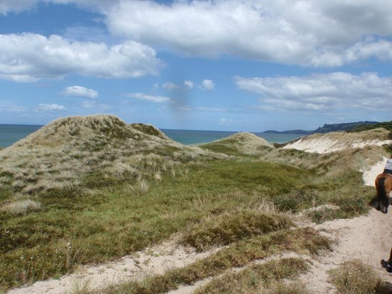 Pakiri Beach Horse Rides - Day Tours: Sand dunes we rode over