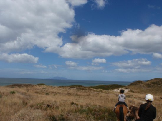 Pakiri Beach Horse Rides - Day Tours: A beautiful piece of NZ