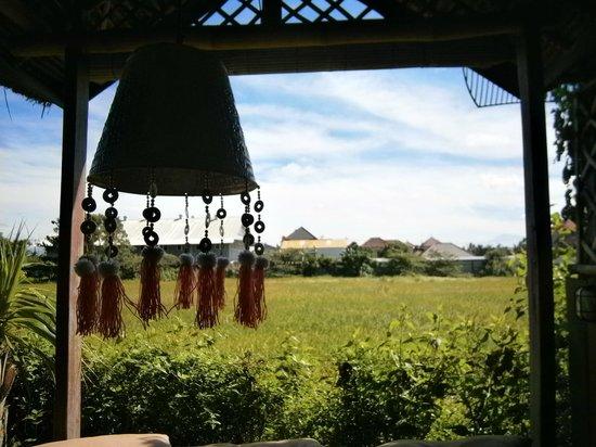 Cafe Canggu: View to rice paddy