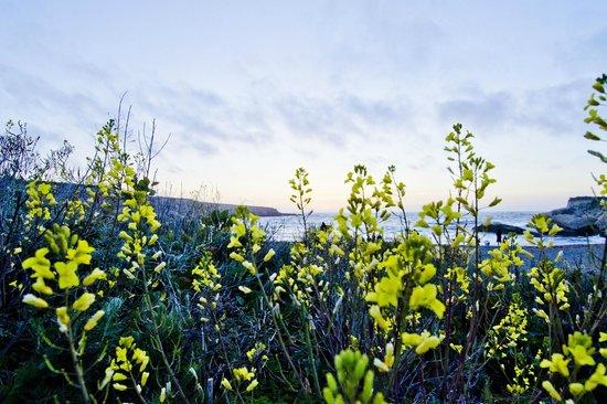 Montana de Oro State Park: Wild mustard