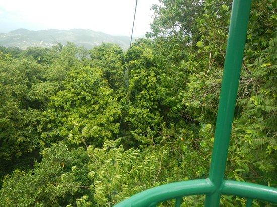 St. Lucia Rain Forest : vue du cannopy