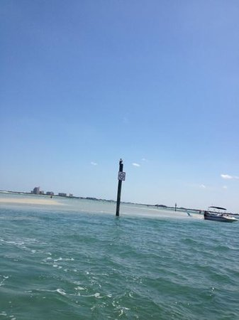Ponce Inlet Watersports: oh yeah we did see a bald eagle on a post.