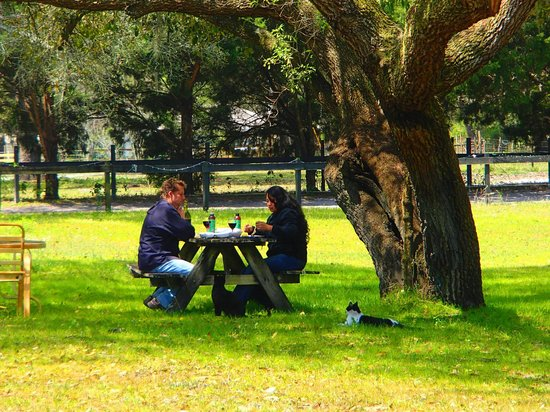 Cypress House Ranch Bed and Breakfast: Romantic picnic. She said Yes!