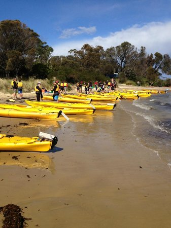 Freycinet Adventures: Group kayaks