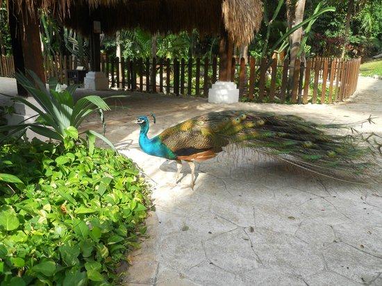 Iberostar Quetzal Playacar: Animaux - site