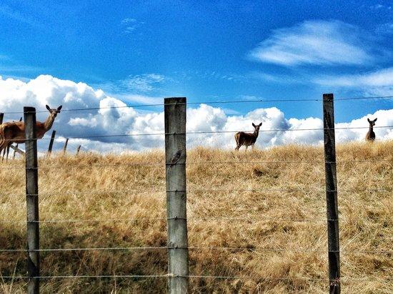 Hunts Farm: Deer!