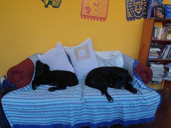 Hostal Posada Mi Casa: Los Perros