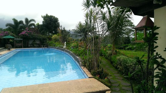 Villa Sumbing Indah: Paddy fields next to the swimming-pool