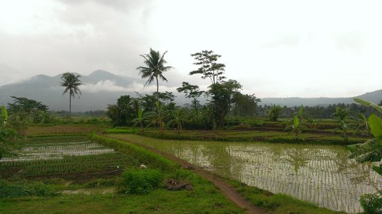 Villa Sumbing Indah: Paddy fields on the way
