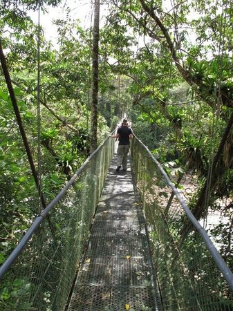Go Tours Costa Rica - Day Tours: Hanging bridge in Sarapiqui