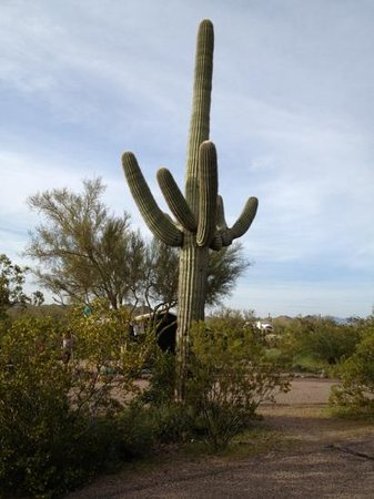 Lost Dutchman State Park: cactus at every site