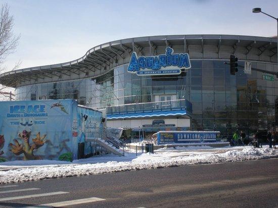 Mermaid Swim Picture Of Downtown Aquarium Denver
