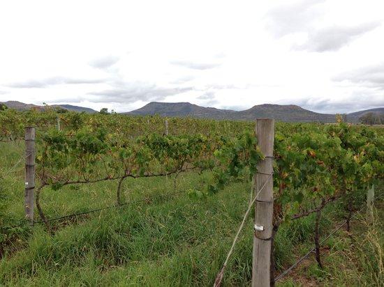 Harrison Hope Wine Estate: Wineyard
