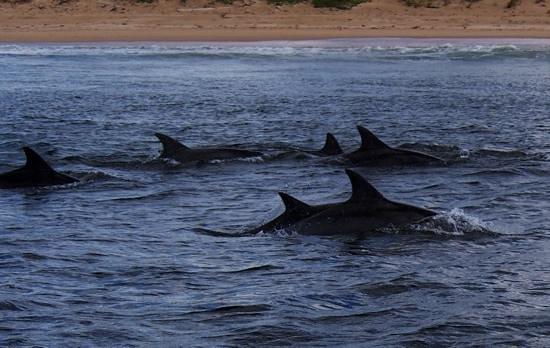 Ocean Safaris: Delfine ganz nah